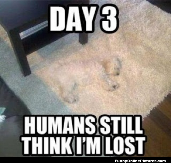 Funny dog meme picture of a puppy who blends in with the carpet